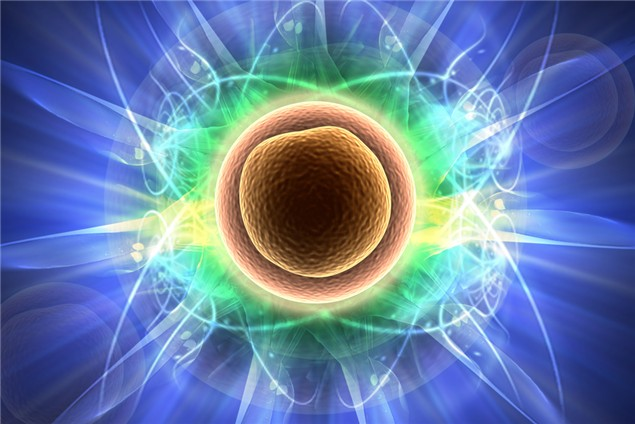 Nuevas directrices para la investigación con células madre